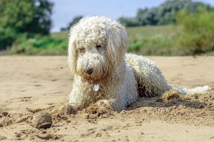 Chalet pet friendly: un'altra modifica al piano spiaggia